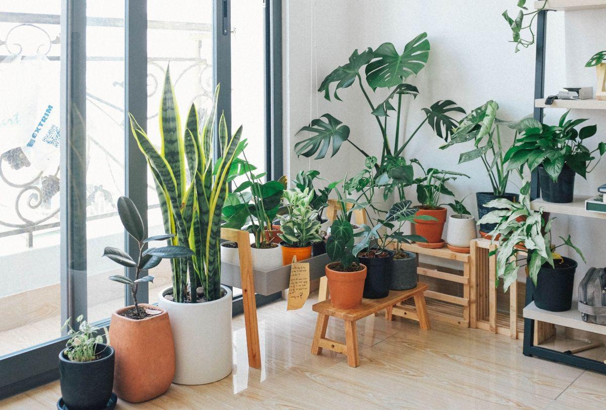Cómo diseñar un jardín en un pequeño espacio urbano en seis pasos