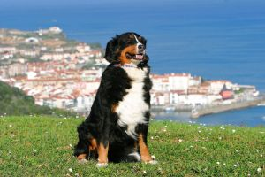 5 ciudades pet friendly para recorrer el mundo con tu perro