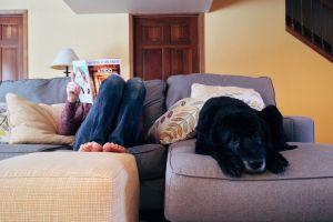 Coronavirus: cómo pasar una cuarentena con las mascotas