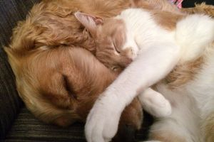 Perro y gato sellan su amistad con abrazo que conquista redes sociales