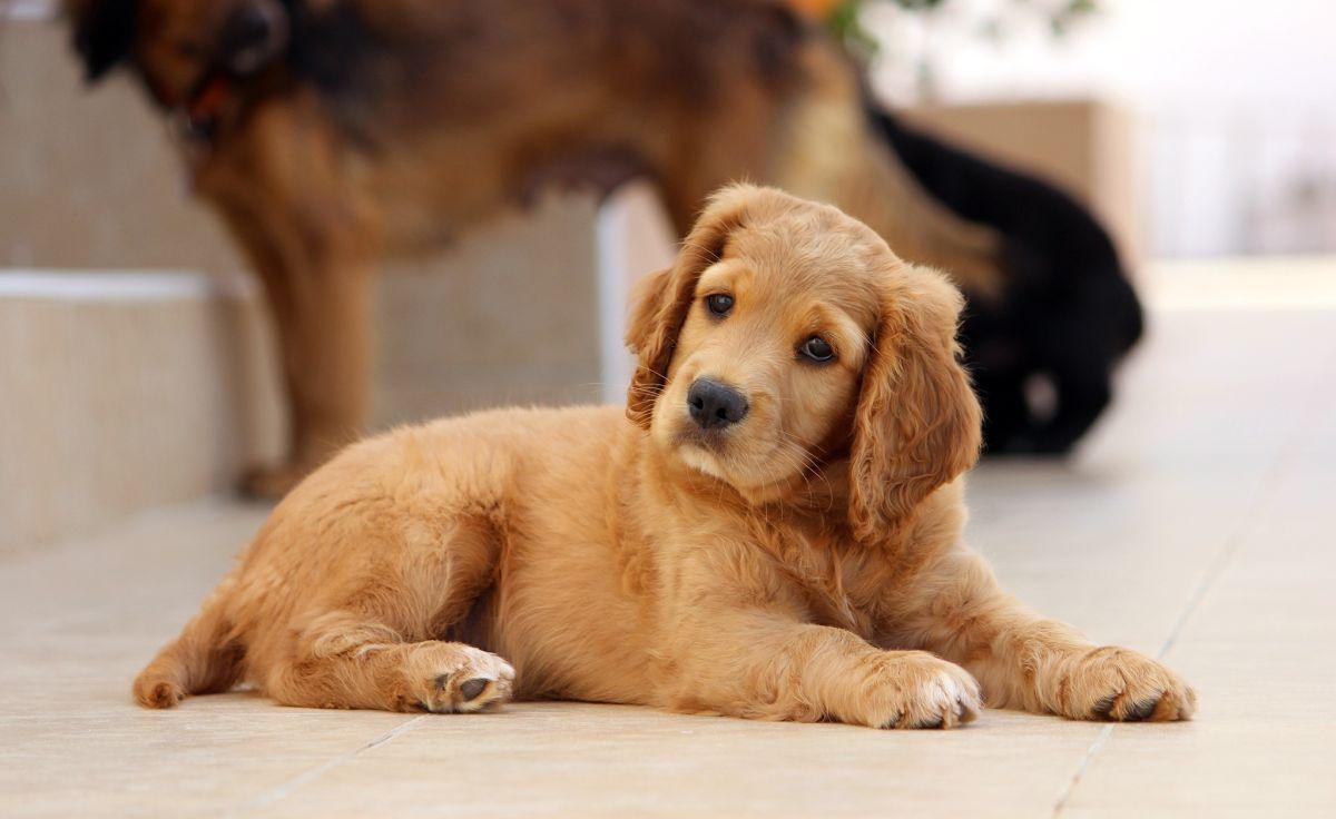 Tip infalible para lograr que un cachorro obedezca