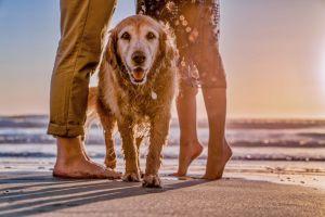 Perro y amo disfrutarán de la playa con estos consejos