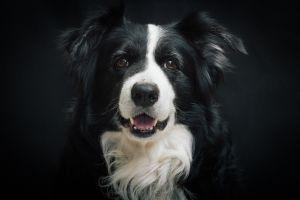 Los mejores perros para una personalidad tranquila