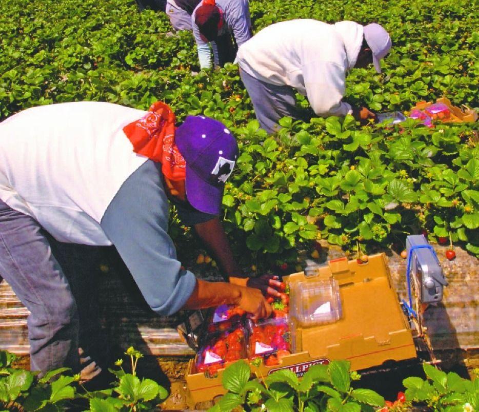 Trabajadores sin documentos luchan mientras la economía se detiene
