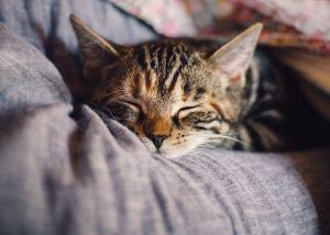 Familia de Las Vegas se reúne con su gato perdido hace 10 años