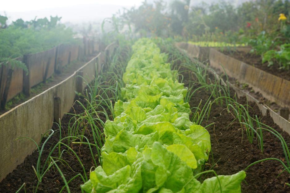Cultiva tus propias verduras en casa con las clases en línea del Jardín Botánico de Nueva York