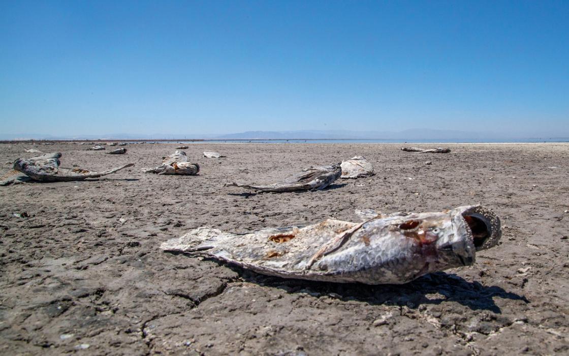 Las comunidades del Salton Sea necesitan alivio por la pandemia y la suciedad del aire