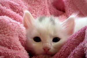 Gato bebé devuelve beso a su ama y cautiva en Tik Tok