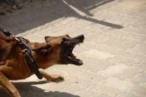 Perro ataca y mata a bebé de seis semanas