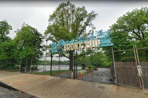 Cuatro tigres más y tres leones dan positivo por coronavirus en zoológico de Nueva York