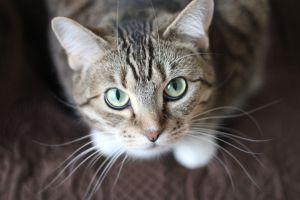 ¿Qué enfermedades se pueden generar por el arañazo de un gato?