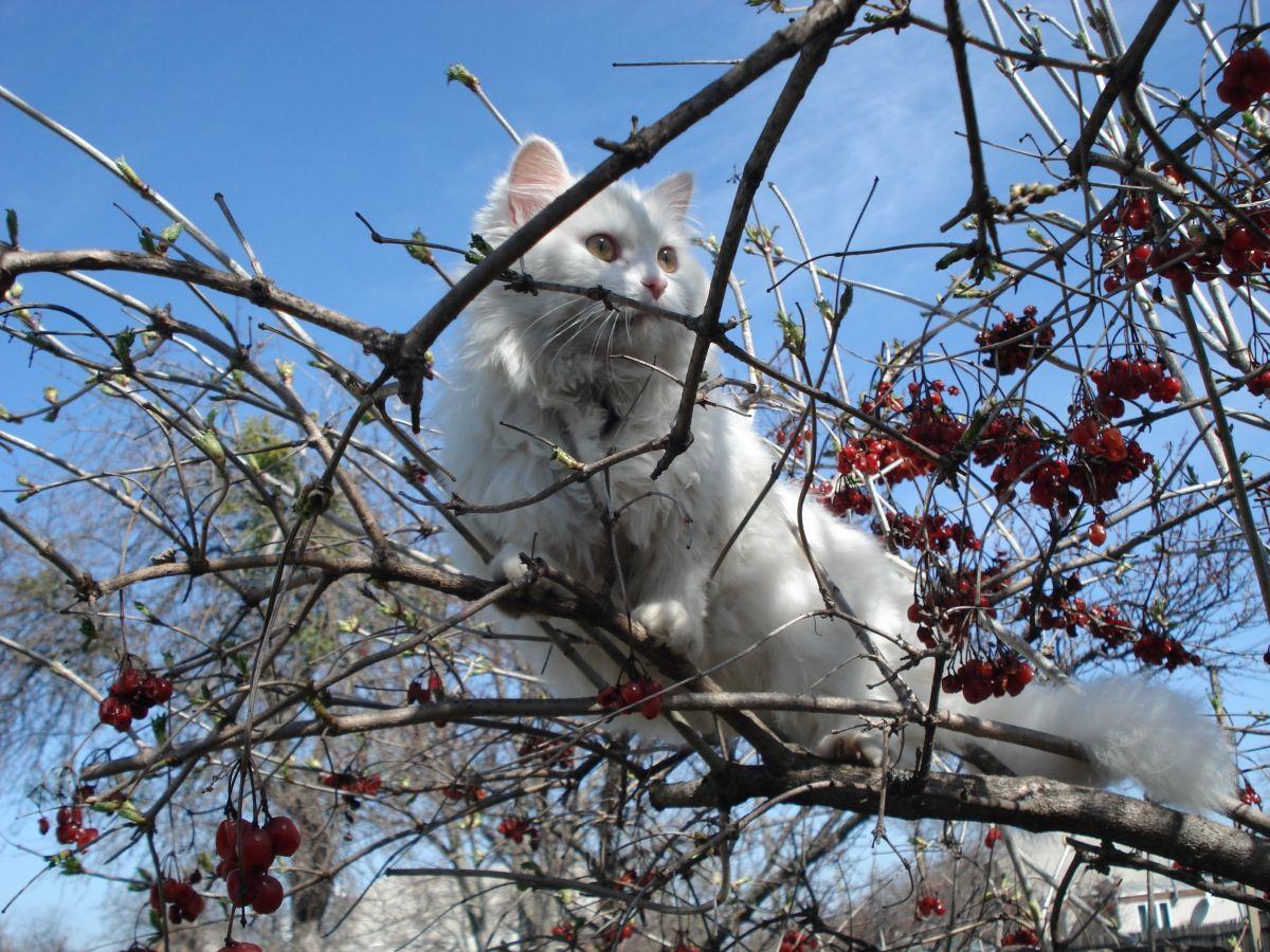 3 razones por las que tu gato se escapa de casa y cómo evitarlo
