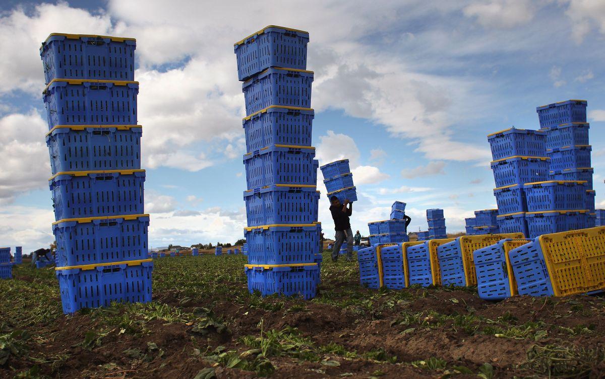 Inmigrantes agricultores quedaron sin trabajo y sin poder volver a casa.