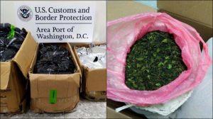 Khat, la droga que está llegando de África para competir con la metanfetamina