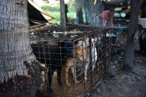 """PETA exige cierre de """"mercados húmedos"""" en donde fauna silvestre es asesinada y vendida"""