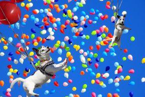 """Perro vuela al estilo de la película """"Up"""" en Tik Tok"""