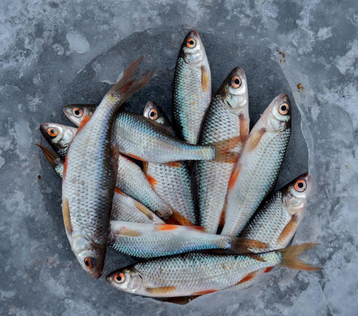 7 pescados que nunca debes comprar