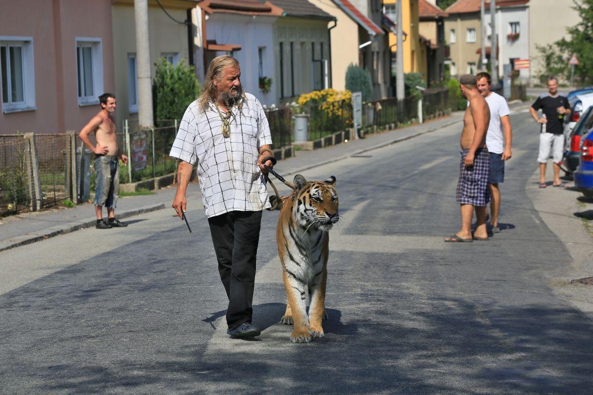 PETA exige que los animales silvestres no estén en espectáculos, ni videos musicales.