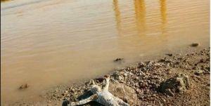 Sorprende aparición de crucifijo a orillas de un río en plena pandemia y Semana Santa