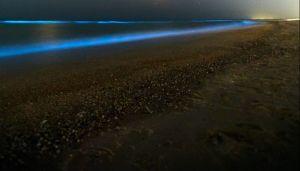 ¿Por qué las playas de California brillan con bioluminiscencia?