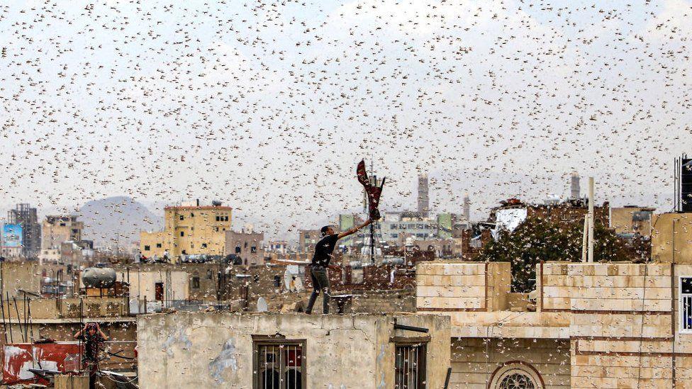 VIDEOS: Plaga de langostas voladoras invade países en África y Oriente, y activan hasta al Banco Mundial