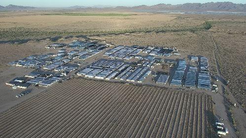 Desmantelan un enorme cultivo de marihuana ilegal en el condado de Riverside, California