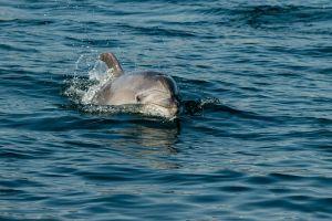 VIDEO: impresionante manada de miles de delfines vista en las costas de Laguna Beach