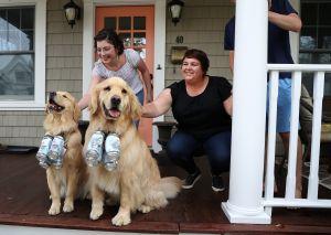 Buddy y Barley, el dúo canino que entrega cervezas a domicilio y está salvando el negocio de sus dueños de la pandemia de coronavirus