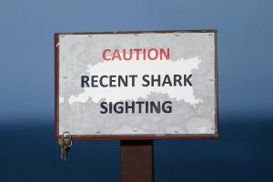 ¡Espeluznante! Surfistas tienen encuentro con 20 tiburones y graban todo en video