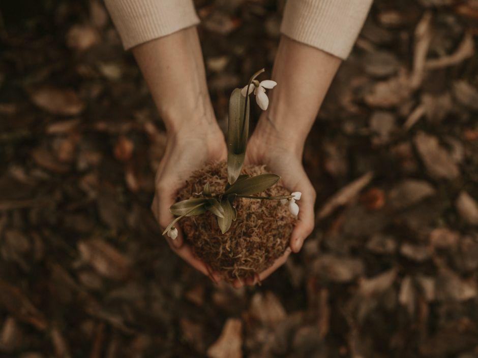 Los 7 consejos básicos de jardinería por expertos cuando eres primerizo