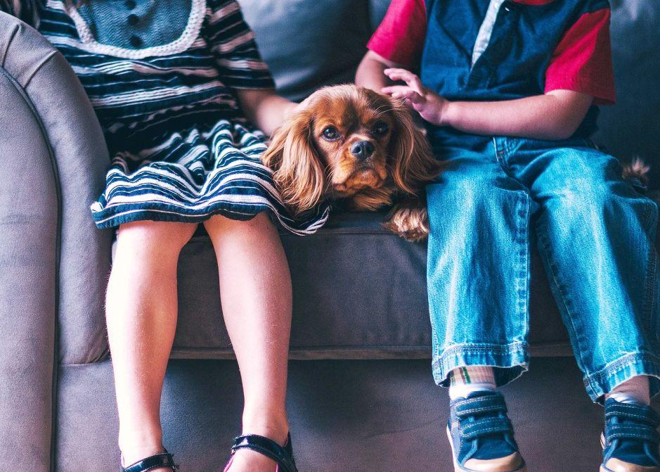 5 modos en que tu mascota te cuida durante la cuarentena