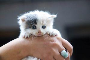 Niñas matan a gato a pisotones para cumplir un reto viral