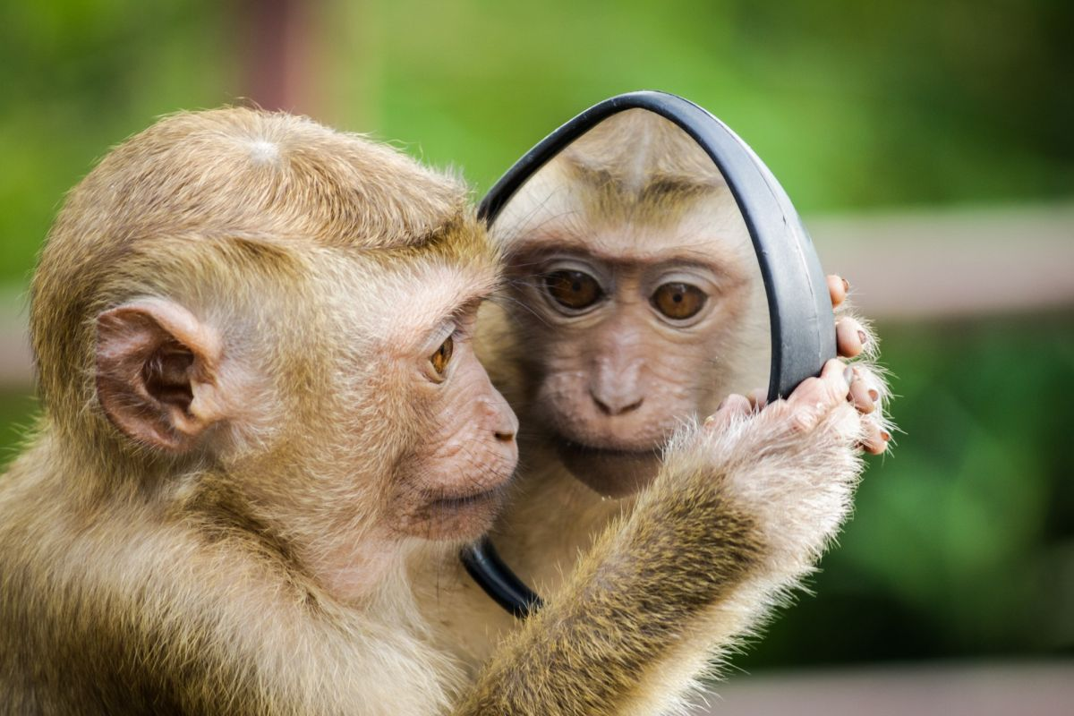 El impactante momento en el que un mono se roba a una niña