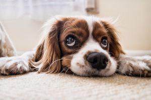 Perro permanece 3 meses afuera de un hospital esperando a su dueño fallecido por coronavirus