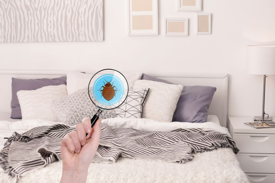 Cómo eliminar los chinches en la cama