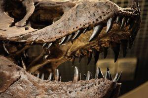 Entra a museo en Sydney para llevar a cabo un robo y aprovecha para tomarse selfie con cráneo de dinosaurio
