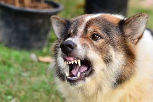 Cómo prevenir el ataque de un perro