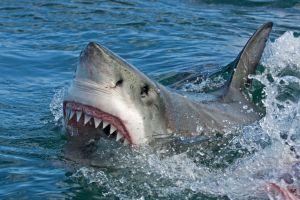Surfista pelea a golpes con tiburón para librarse de ataque