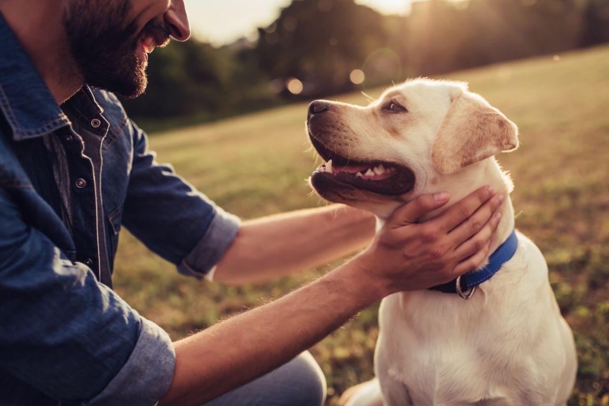 El mejor amigo: Bombero y su perro mueren con tan solo una hora de diferencia