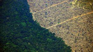 Los 10 países que perdieron más bosque virgen en el mundo (y 5 están en América Latina)