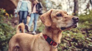 Lo que necesitas saber sobre la prevención de garrapatas para perros y gatos