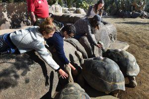 El popular zoológico de San Diego, California ya tiene fecha de reapertura