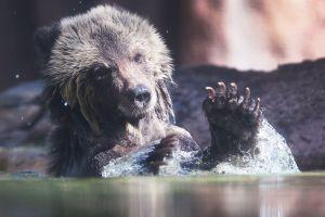 Gobierno Trump da luz verde a la caza de crías de animales salvajes