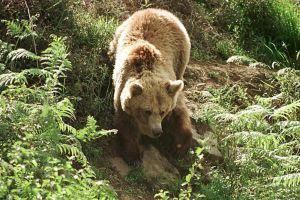 Mujer es atacada por un oso en Sierra Madre, California mientras dormía una siesta en su patio trasero