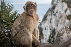 A los monos les gustan los avatares más parecidos a ellos