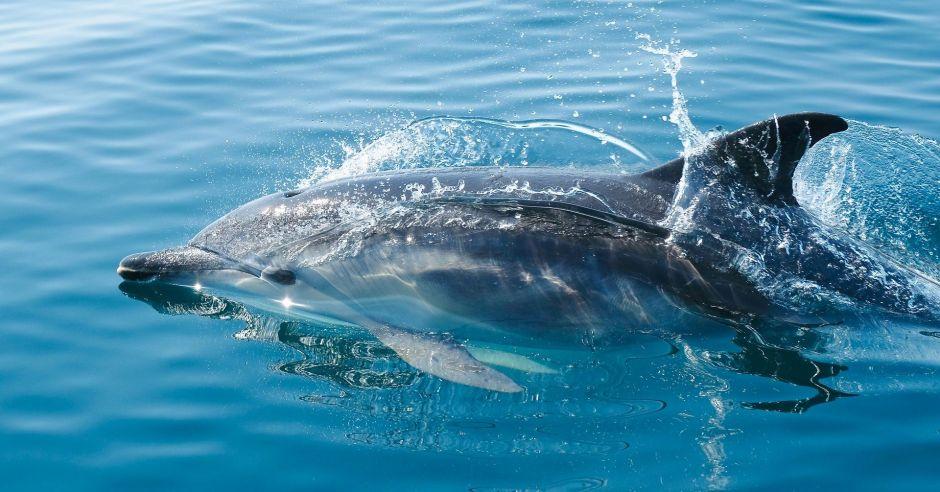 El increíble momento en el que un delfín juega con un buzo