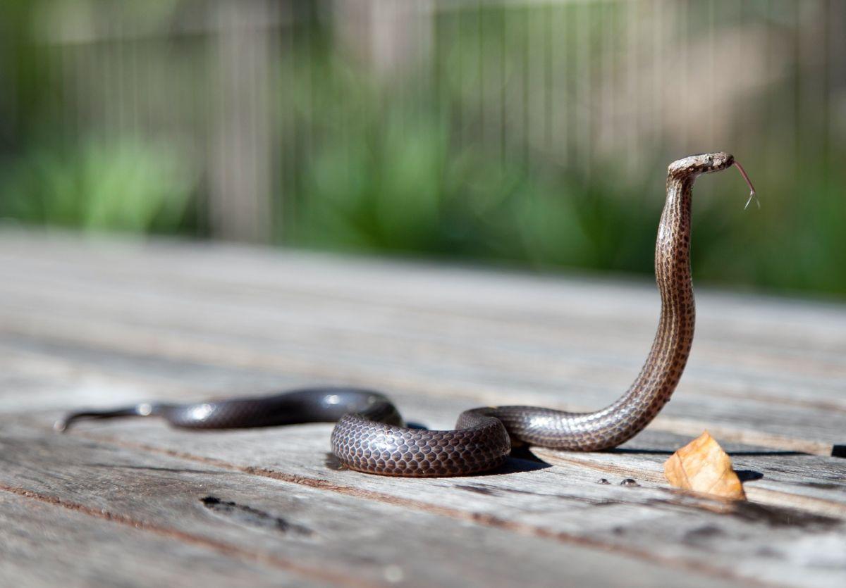 Descubre el significado de soñar con serpientes.