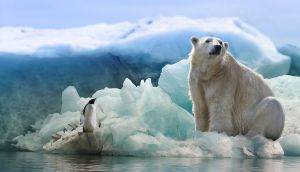 Alarmante: El Ártico registra una temperatura más alta que nunca antes