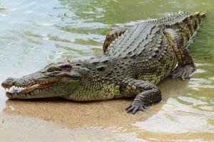 Mujer en Indonesia fue devorada por cocodrilo mientras pescaba