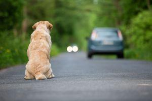 Mujer fue captada abandonando en la calle a perro discapacitado